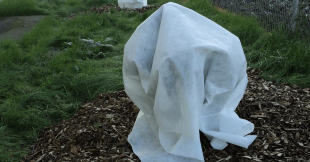 cum protejam pomii fructiferi de inghet cu agril