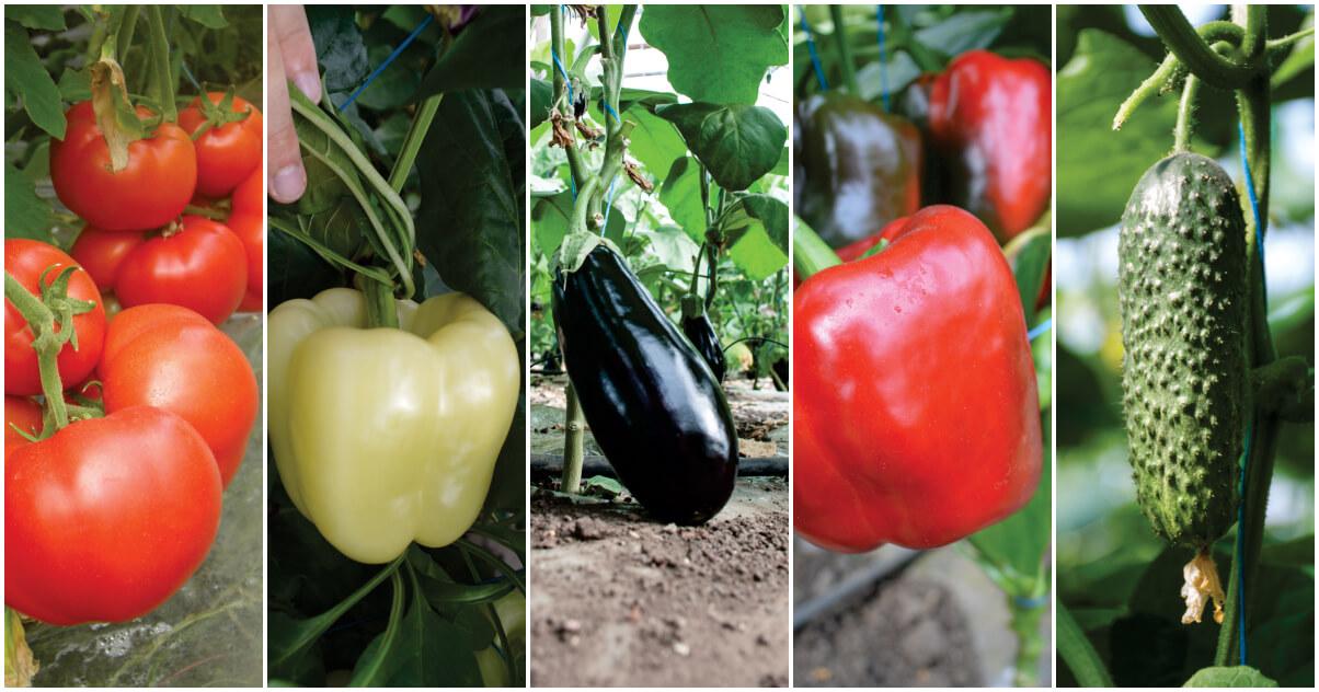 utilizarea planurilor de fertilizare in legumicultura