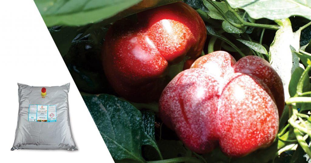 Protectia fructelor si a plantelor cu agrowhite